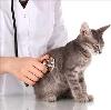 Ветеринарные клиники в Турунтаево